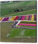 Tulip Town Aerial Canvas Print