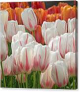 Tulip Wave Canvas Print
