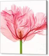 Tulip, X-ray Canvas Print