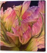 Tulipe Explosee Canvas Print