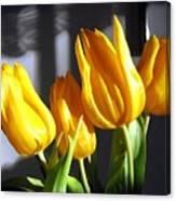 Tulipfest 2 Canvas Print