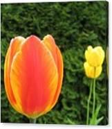 Tulipfest 4 Canvas Print