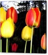 Tulipfest 9 Canvas Print