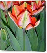 Tulips - A Bunch Of Beauties Canvas Print