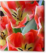 Tulips - Competing For Attention Canvas Print