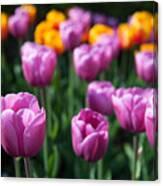 Tulips 14 Canvas Print