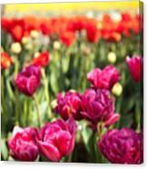 Tulips 2 Canvas Print