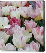 Tulips 3 Canvas Print