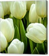 Tulips 4 Canvas Print