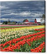 Tulips And Barn Canvas Print