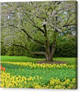 Tulips And Cherry Blossom 2 Canvas Print