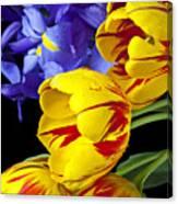 Tulips And Iris Canvas Print
