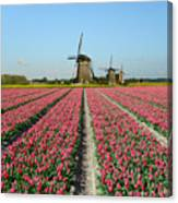 Tulips And Windmills In Holland Canvas Print