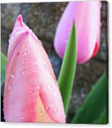 Tulips Artwork Pink Tulip Flowers Srping Florals Art Prints Baslee Troutman Canvas Print