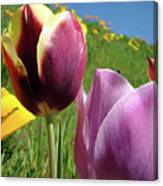 Tulips Artwork Tulip Flowers Spring Meadow Nature Art Prints Canvas Print