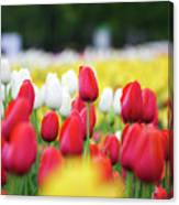 Tulips By Jared Windmuller - Tulip - Red -  Canvas Print