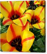 Tulips By The Artist Canvas Print