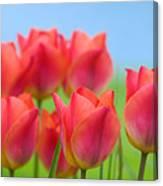 Tulips Close Up  Canvas Print
