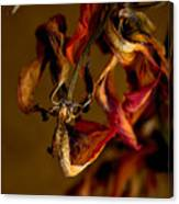 Tulip's Demise - A Natural Abstract Canvas Print