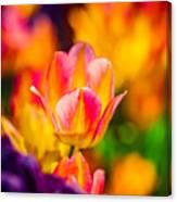 Tulips Enchanting 15 Canvas Print