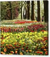 Tulips Everywhere 1 Canvas Print