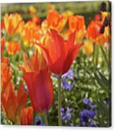 Tulips Everywhere 3 Canvas Print