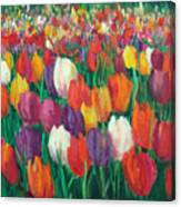 Tulips Everywhere Canvas Print
