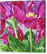 Tulips From A Friend Canvas Print