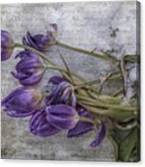 Tulips Frozen Canvas Print