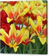Tulips Glorious Tulip Monsella Canvas Print