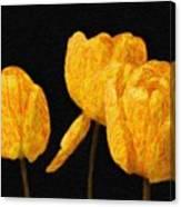 Tulips - Id 16235-220512-0422 Canvas Print