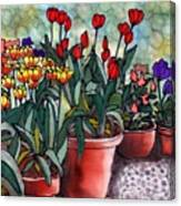 Tulips in Clay Pots Canvas Print