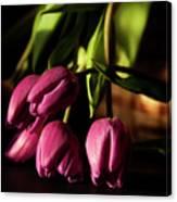 Tulips In Evening Sunlight Canvas Print