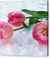 Tulips In Snow Canvas Print