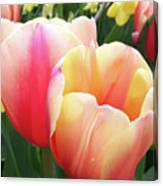 Tulips In Soft Pastels Canvas Print