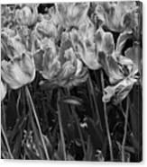 Tulips In The Breeze Canvas Print