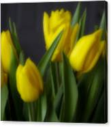 Tulips In The Kitchen Canvas Print