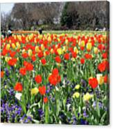 Tulips In The Park. Canvas Print