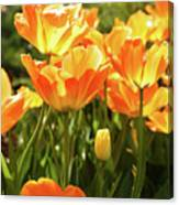 Tulips In The Sunlight Canvas Print