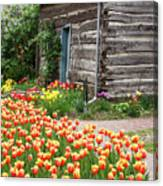 Tulips Lead To The Cabin Canvas Print