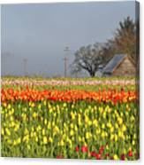 Tulips Morning Landscape Canvas Print