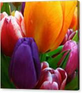 Tulips Smiling Canvas Print