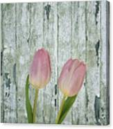 Tulips Two Canvas Print