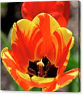 Tulips Yellow Red Canvas Print