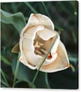 Tulipsandbluebells Canvas Print