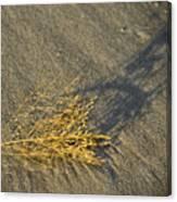 Tumble Seaweed Canvas Print