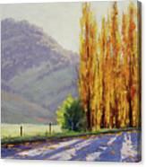 Tumut Poplars Canvas Print