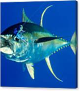 Tuna Magic Canvas Print