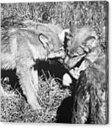 Tundra Wolf Pups Canvas Print
