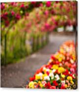 Tunnel Of Roses Canvas Print